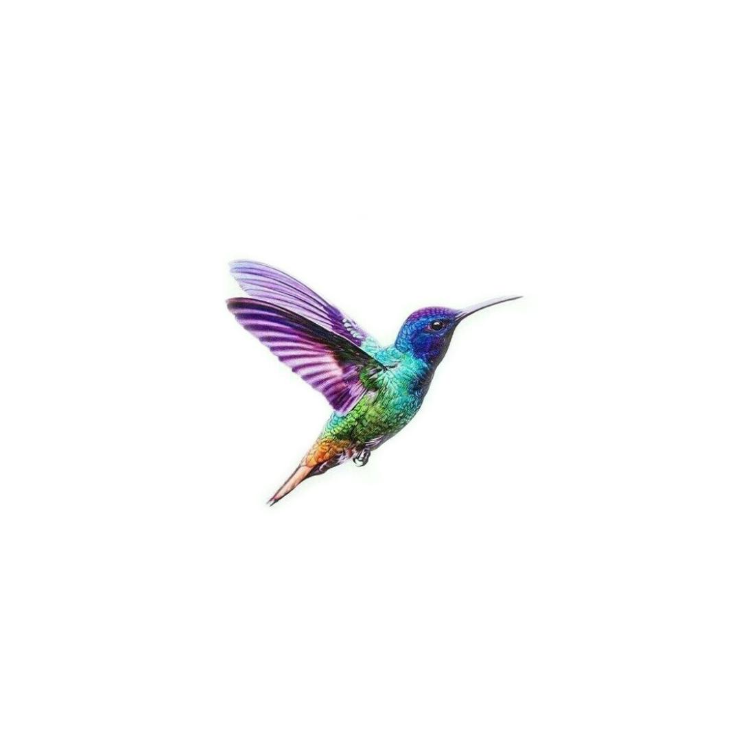 tiny hummingbird 2.jpg
