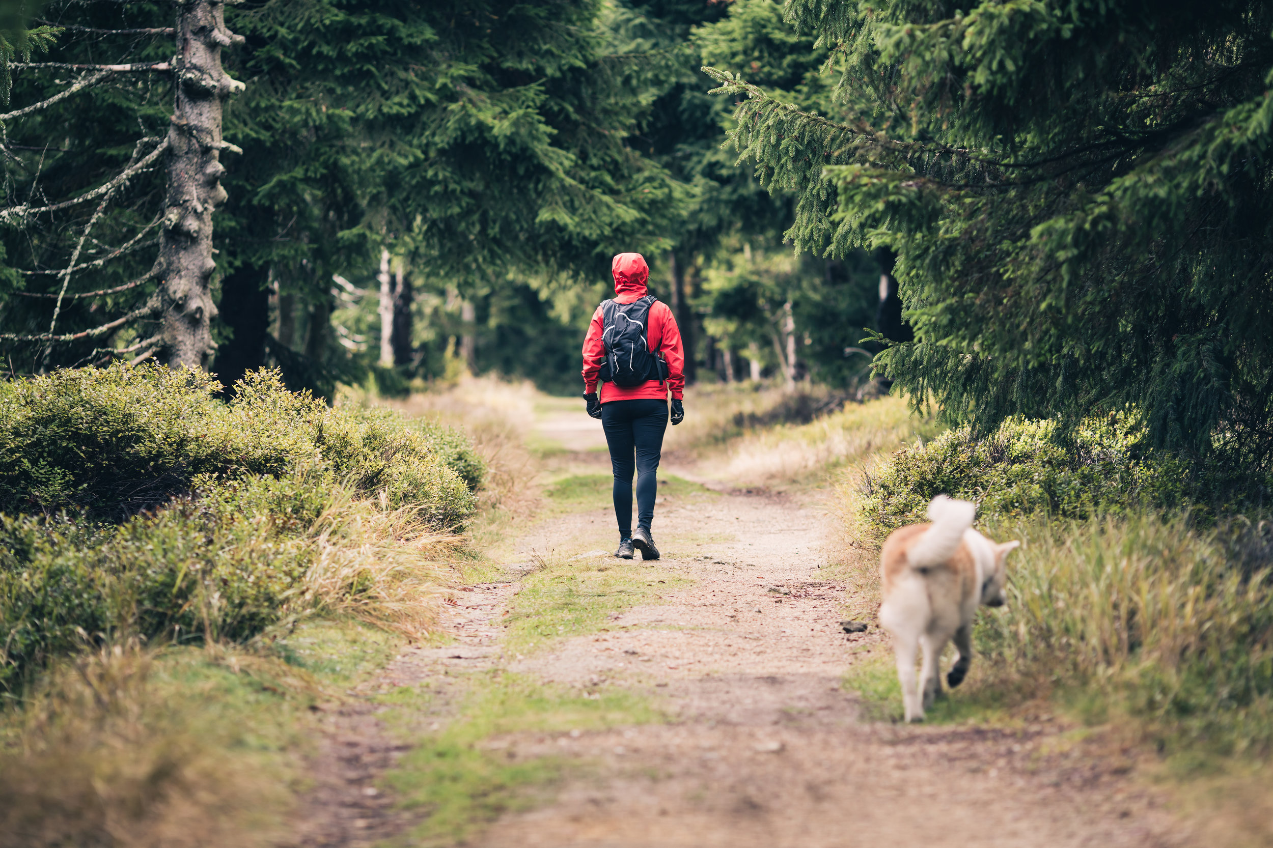 happy-woman-hiking-walking-with-dog-P5Z4X4Q.jpg
