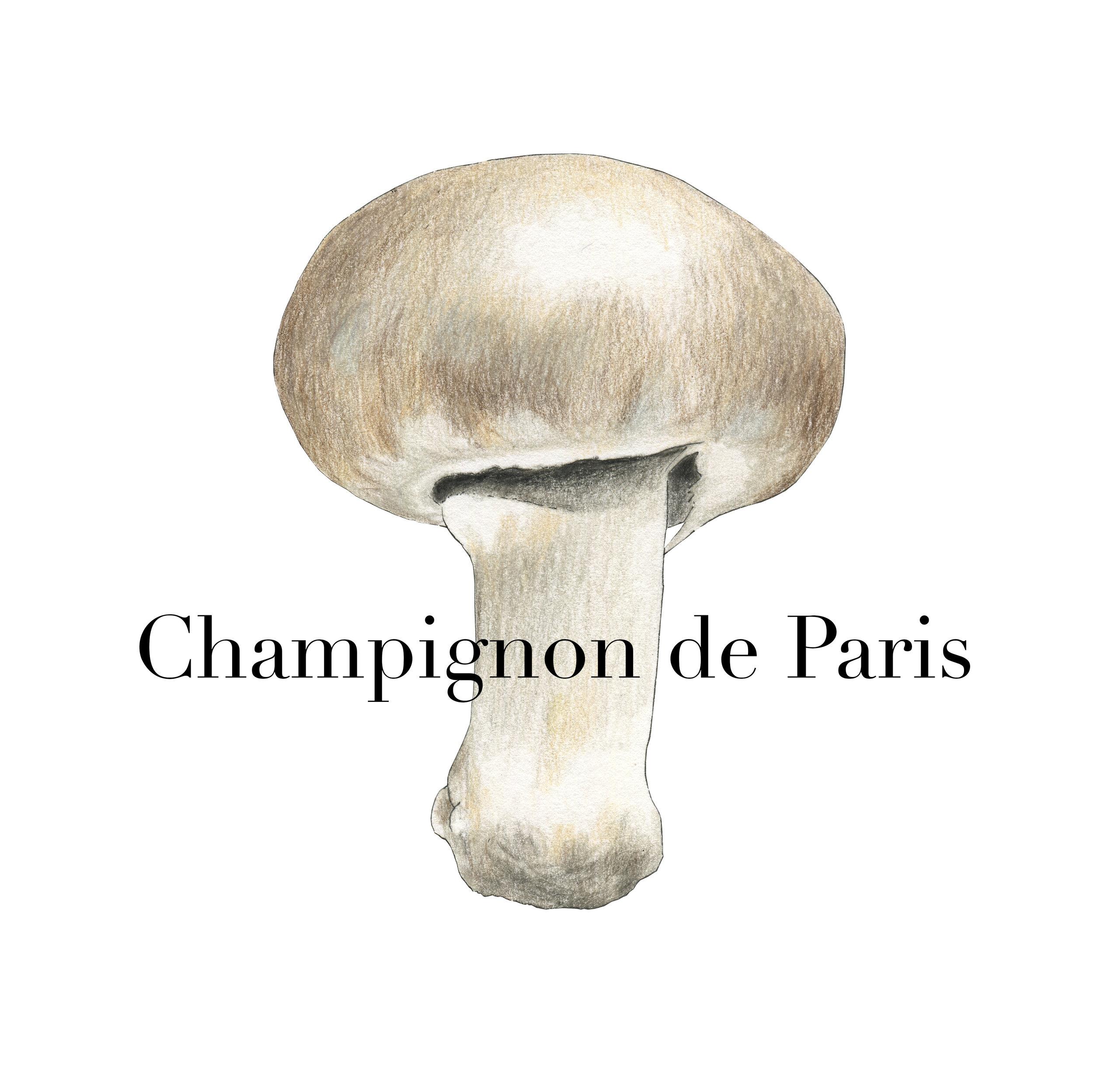 Champignon de Paris (2019)