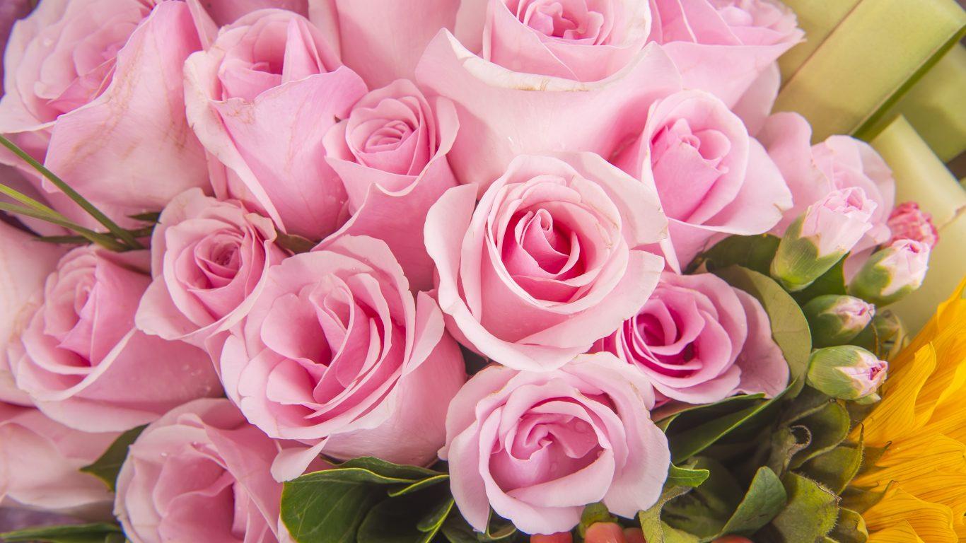 flower-flowers-bouquet-pink-roses-wallpapers-in-full-hd-1366x768.jpg