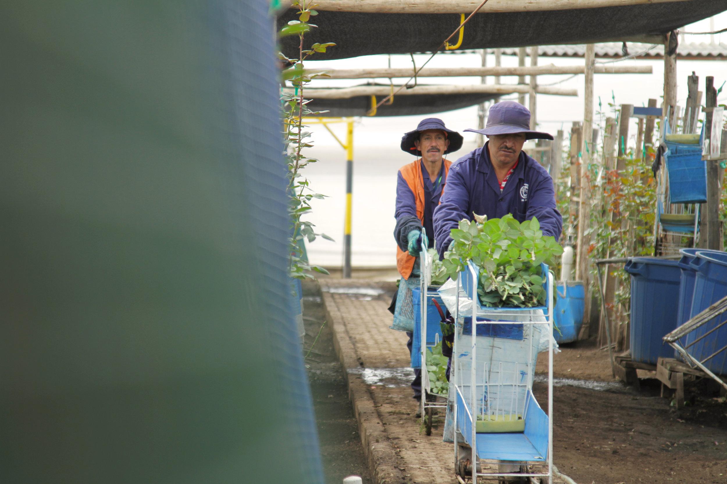 Grupo Andes Farms (2).jpg