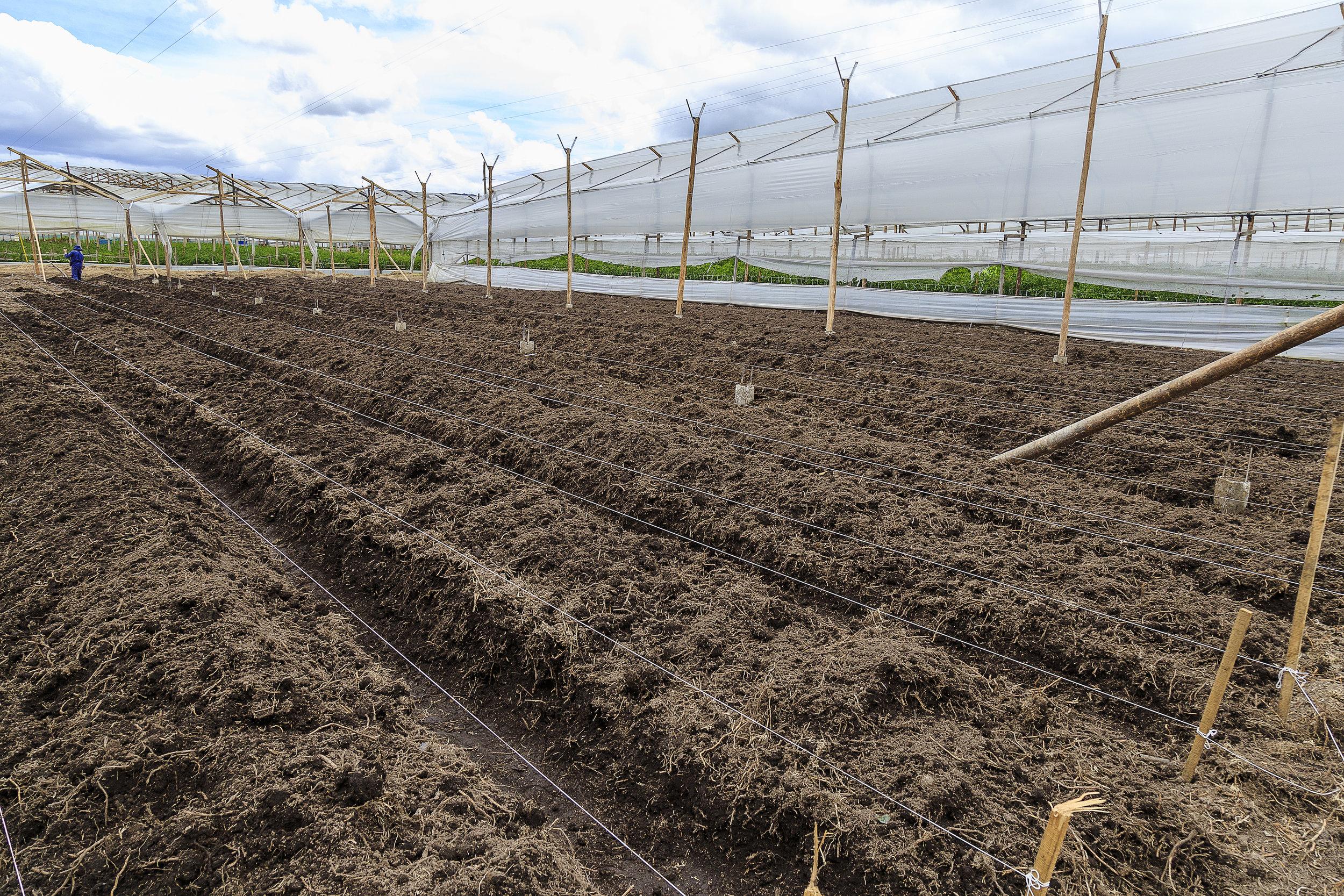 Grupo Andes Farms (7) copy.jpg