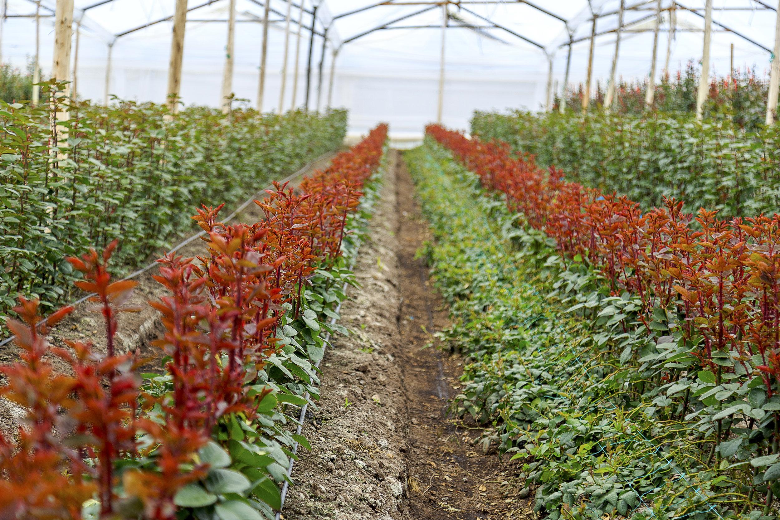 Grupo Andes Farms (10).jpg