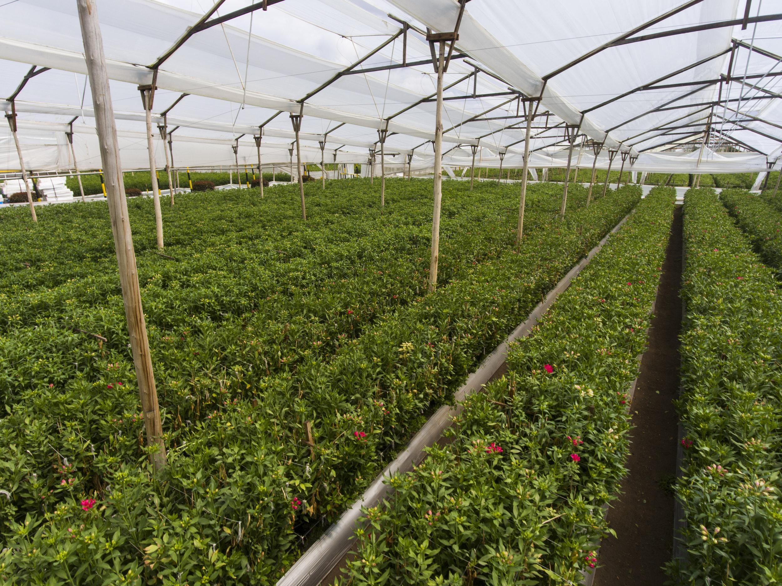 Grupo Andes Farms (17).jpg