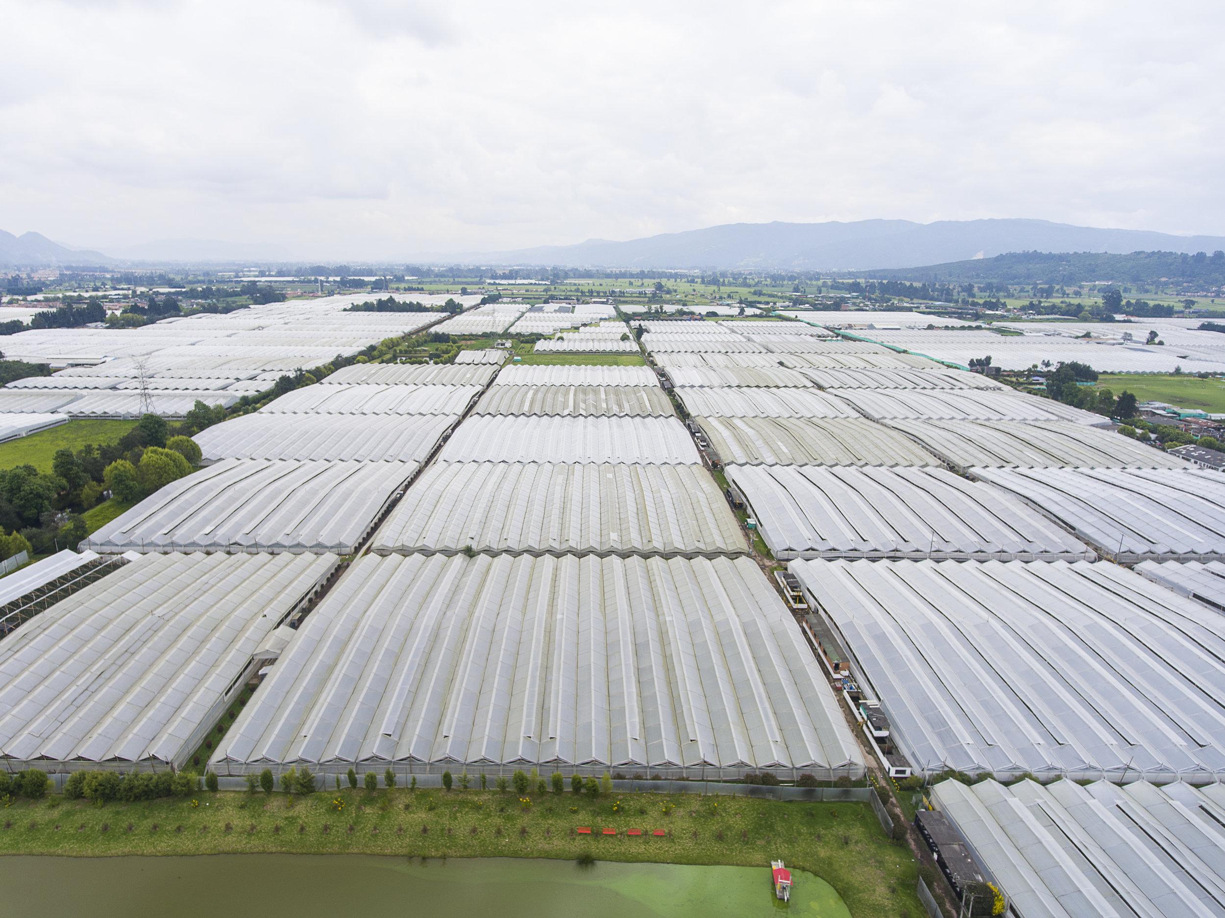 Grupo Andes Farms (21).jpg
