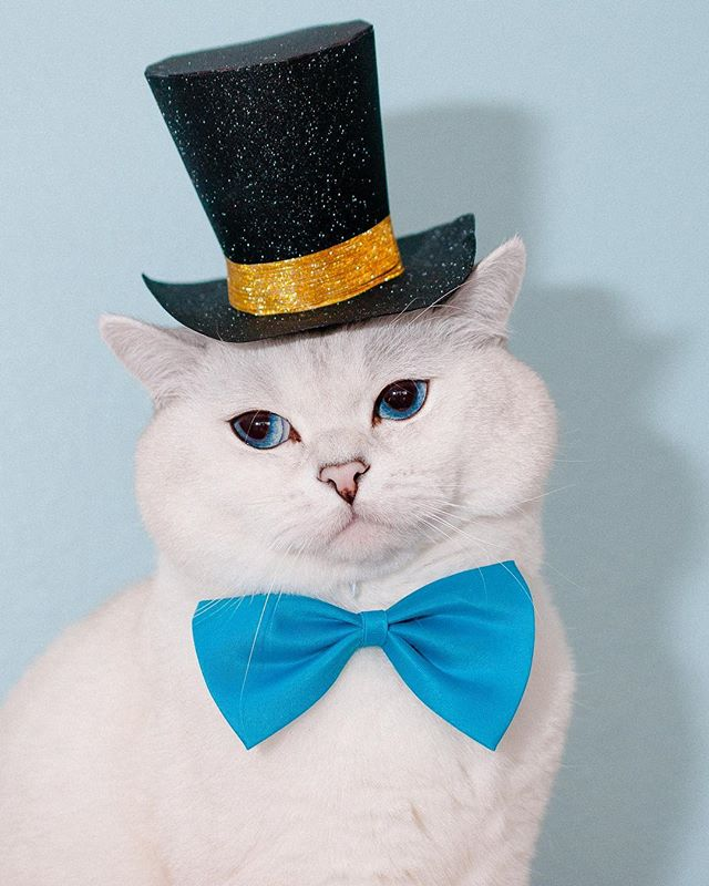 Don't be sad, here's a photo of a cat in a top hat 🎩  Shot for @freshstep with Mr. White  @white_coffee_cat