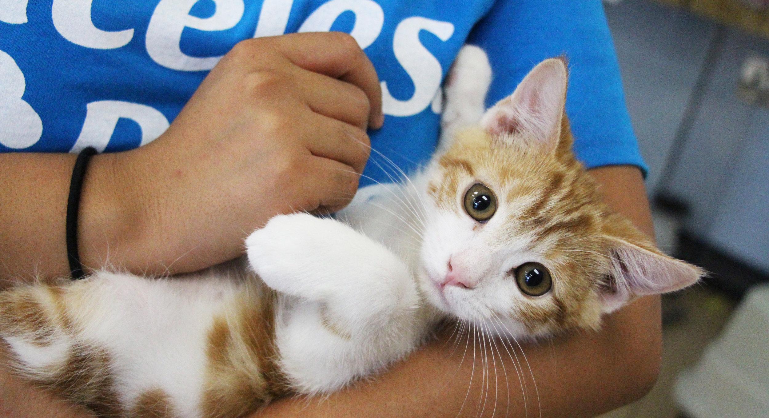 kittenblog.jpg