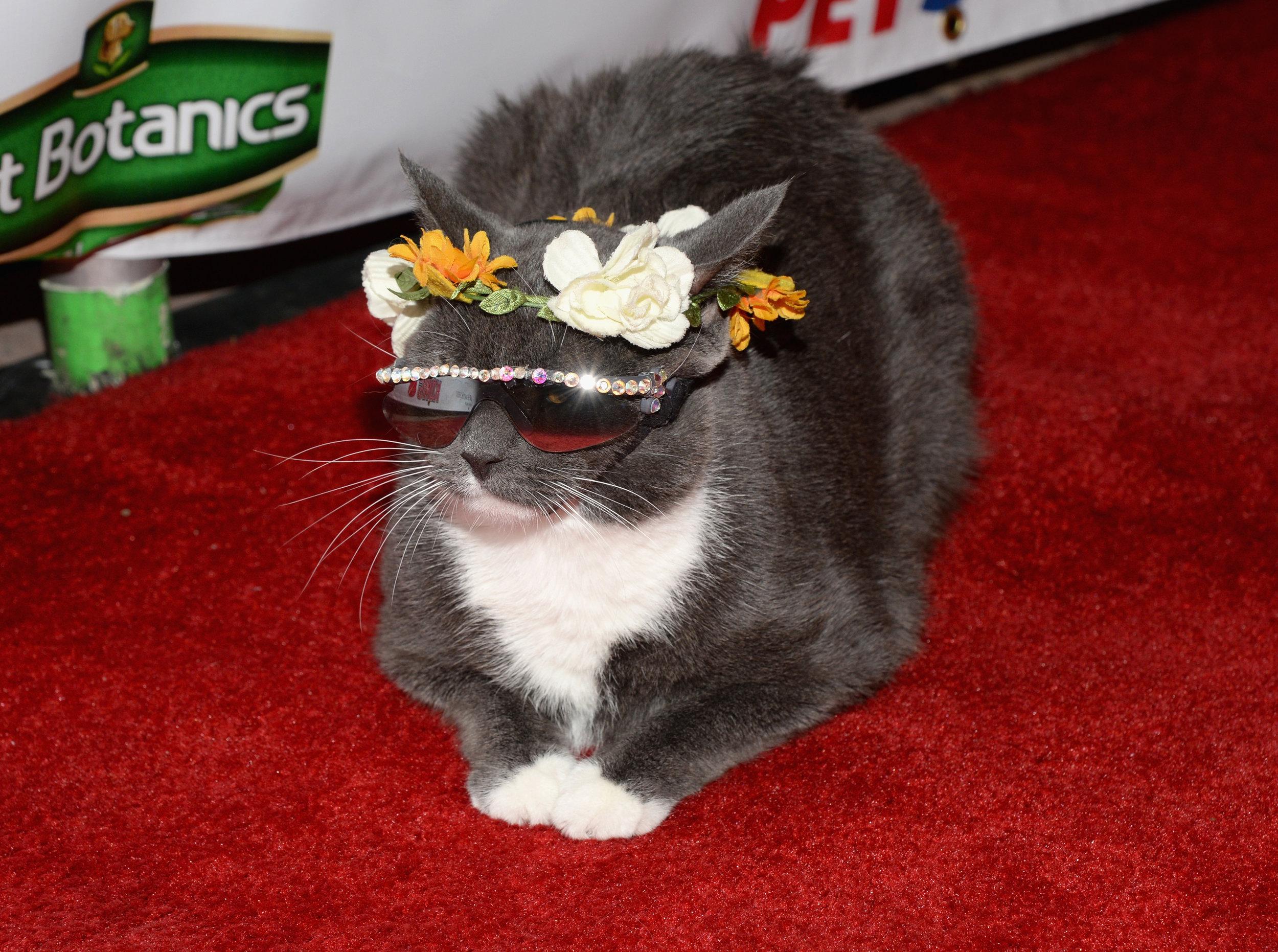 Bagel, a.k.a. Sunglass Cat (2).jpg