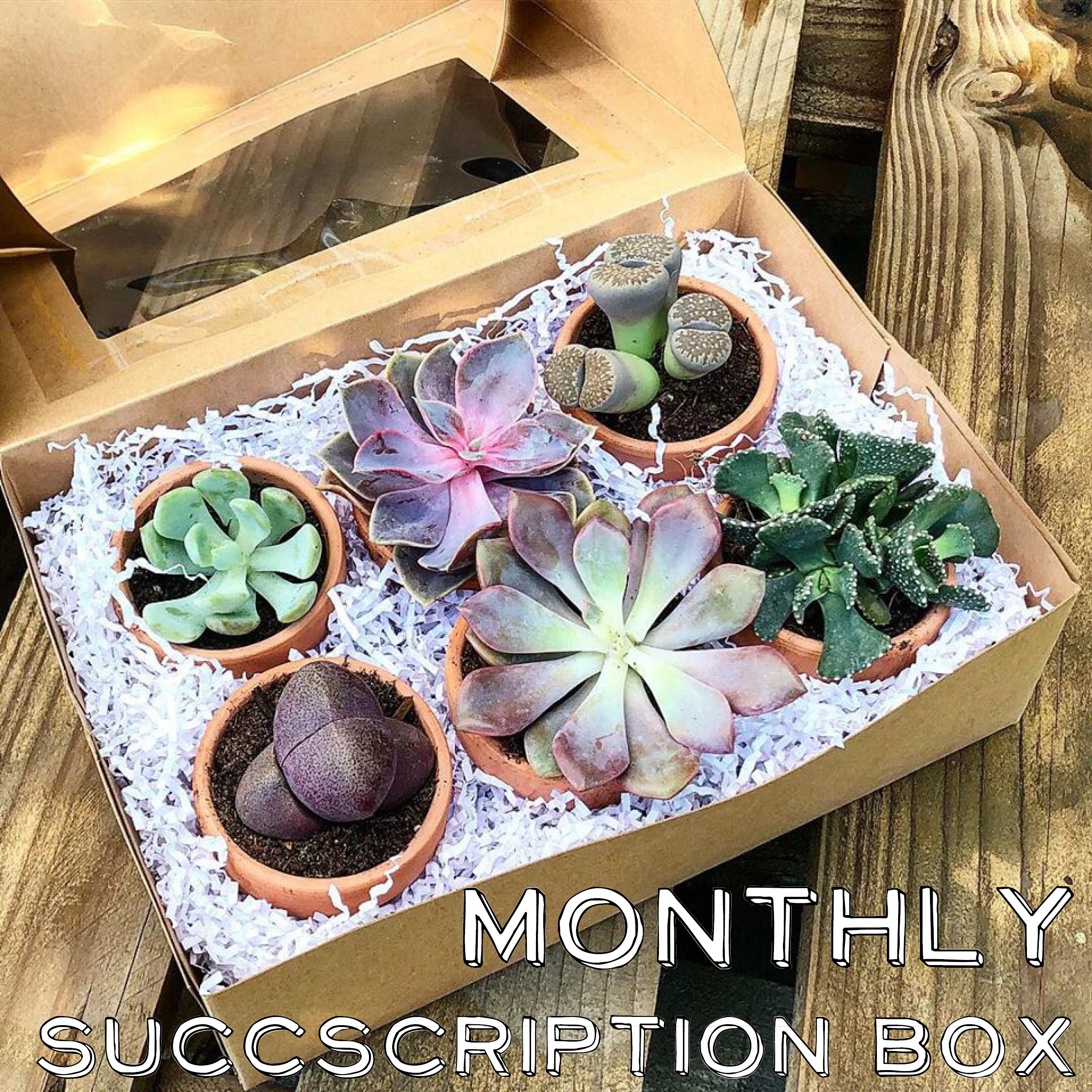 SUB BOX 1.jpg