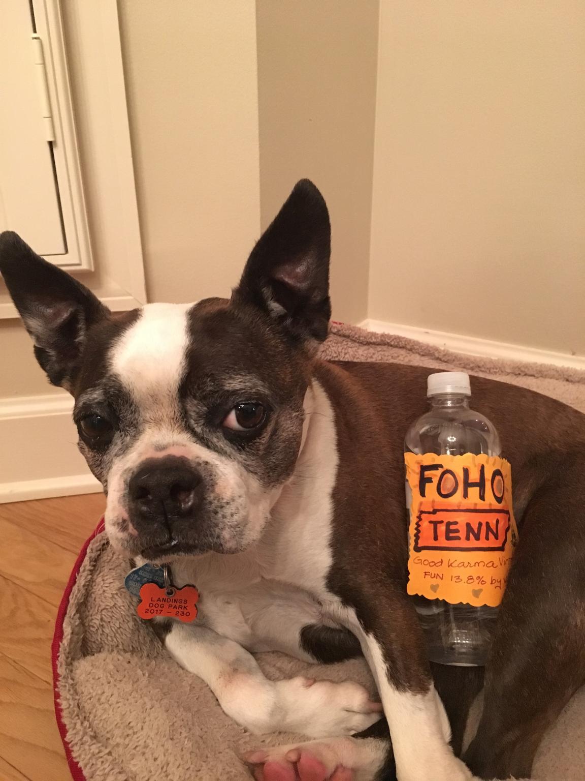Gussie With FoHo Bottle.jpg