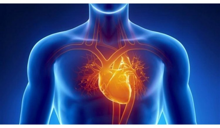 How Do You Save Someone in Cardiac Arrest? - Cardiac arrest is one of the leading causes of death in humans. I know, I'm starting this article out with a statistical bummer, but it has a purpose. After reading this, you should be able to identify and treat cardiac arrest when it happens. If nothing else, keep this information in the back of your head. It may end up being lifesaving. READ MORE!