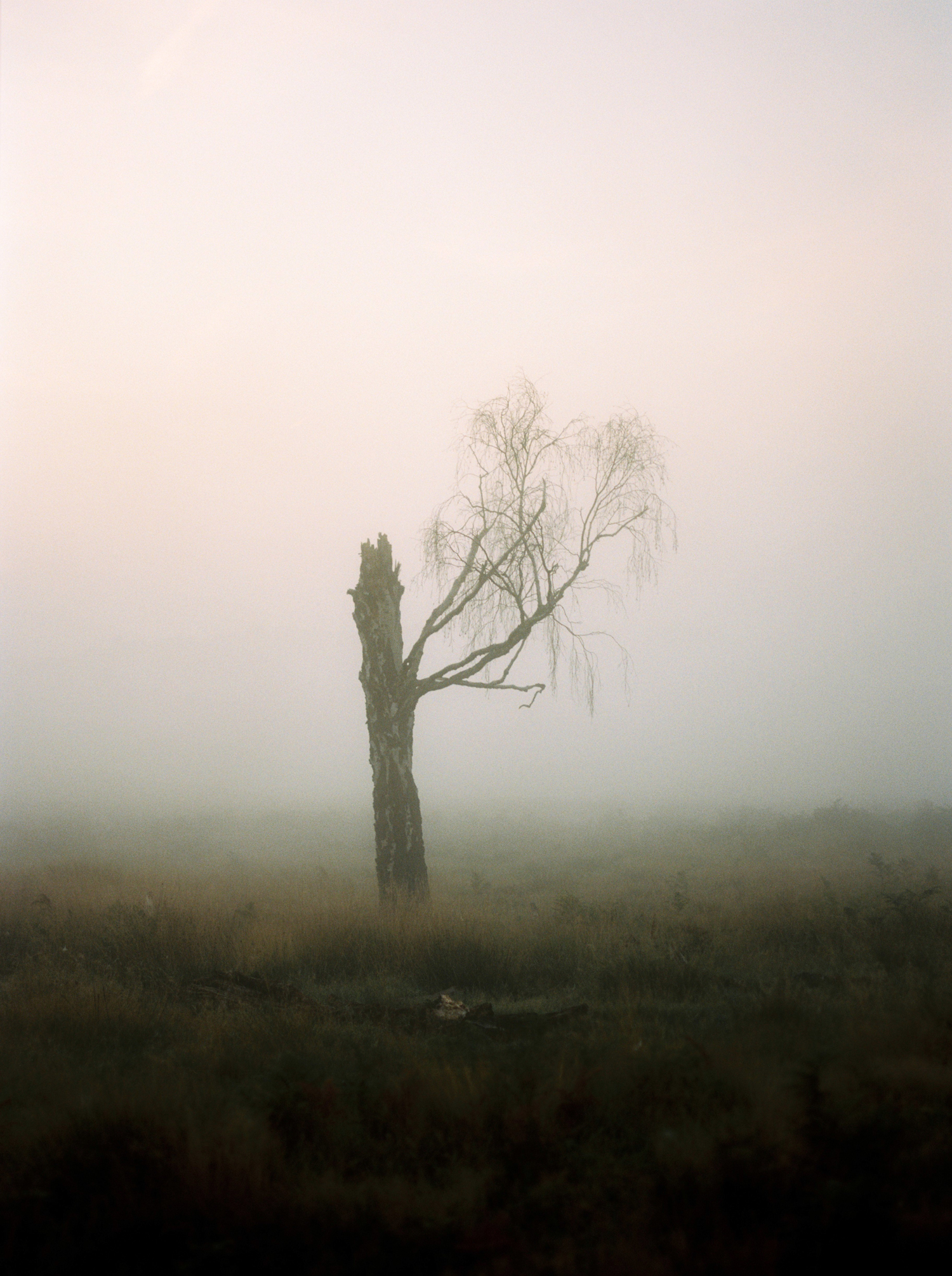 17_foggy_richmond_park.jpg
