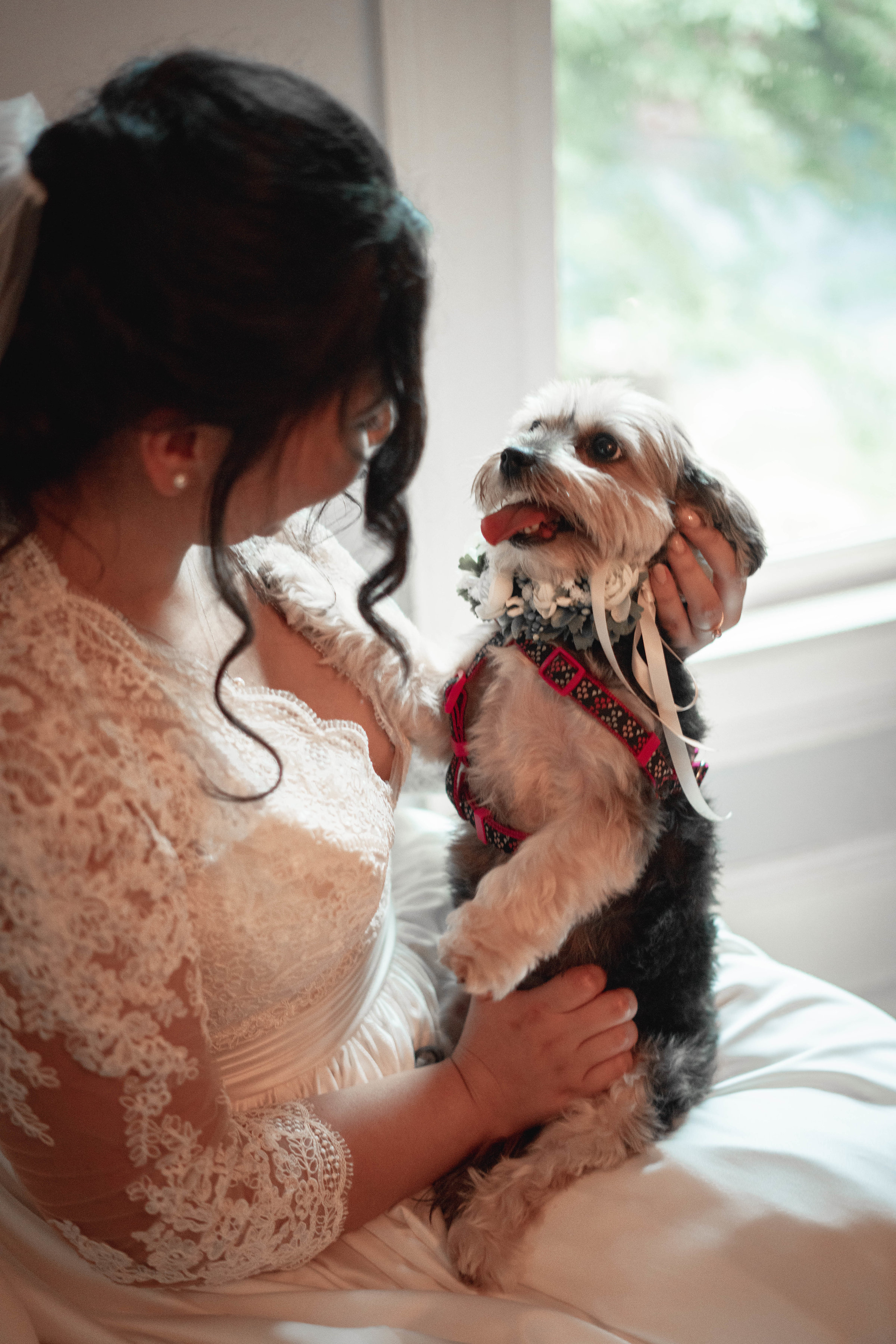 Flower Dog In Wedding