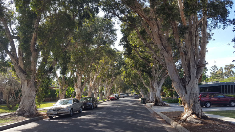 Typical Mar Vista Street