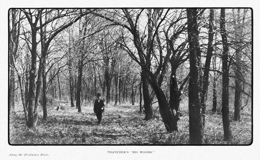 """""""Thatcher Woods,"""" from  The 1904 Report of the Special Park Commission to the City Council of Chicago on the Subject of A Metropolitan Park System,  by Dwight H. Perkins and Jens Jensen."""