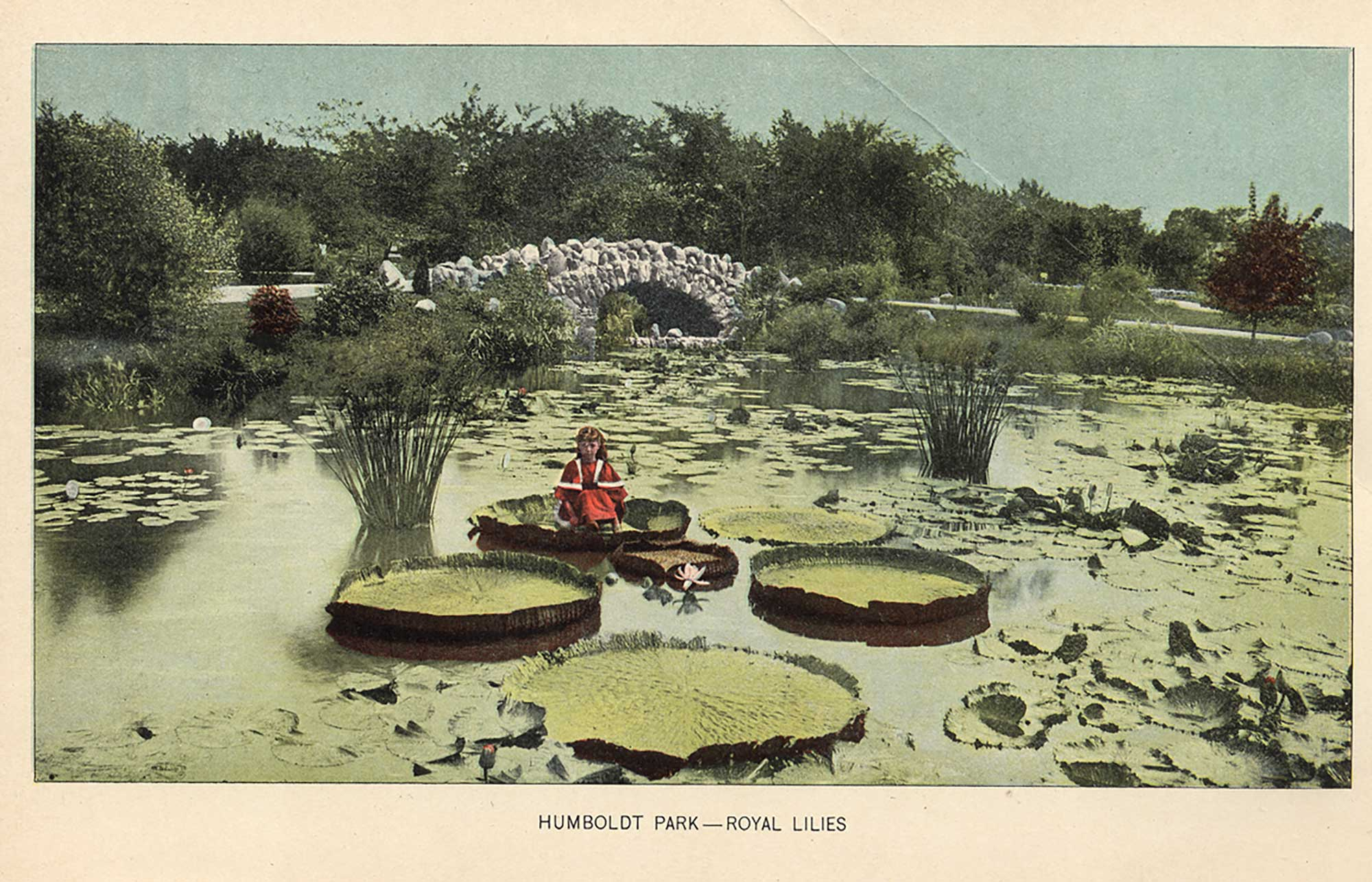 This photograph depicts Jensen's daughter Katherine Jensen sitting on a royal lily in the lily pond. 1899,  Thirty-First Annual Report of West Chicago Park Commissioners