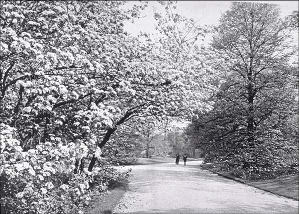 Graceland Cemetery, ca. 1912, from  The Prairie Spirt in Landscape Gardening
