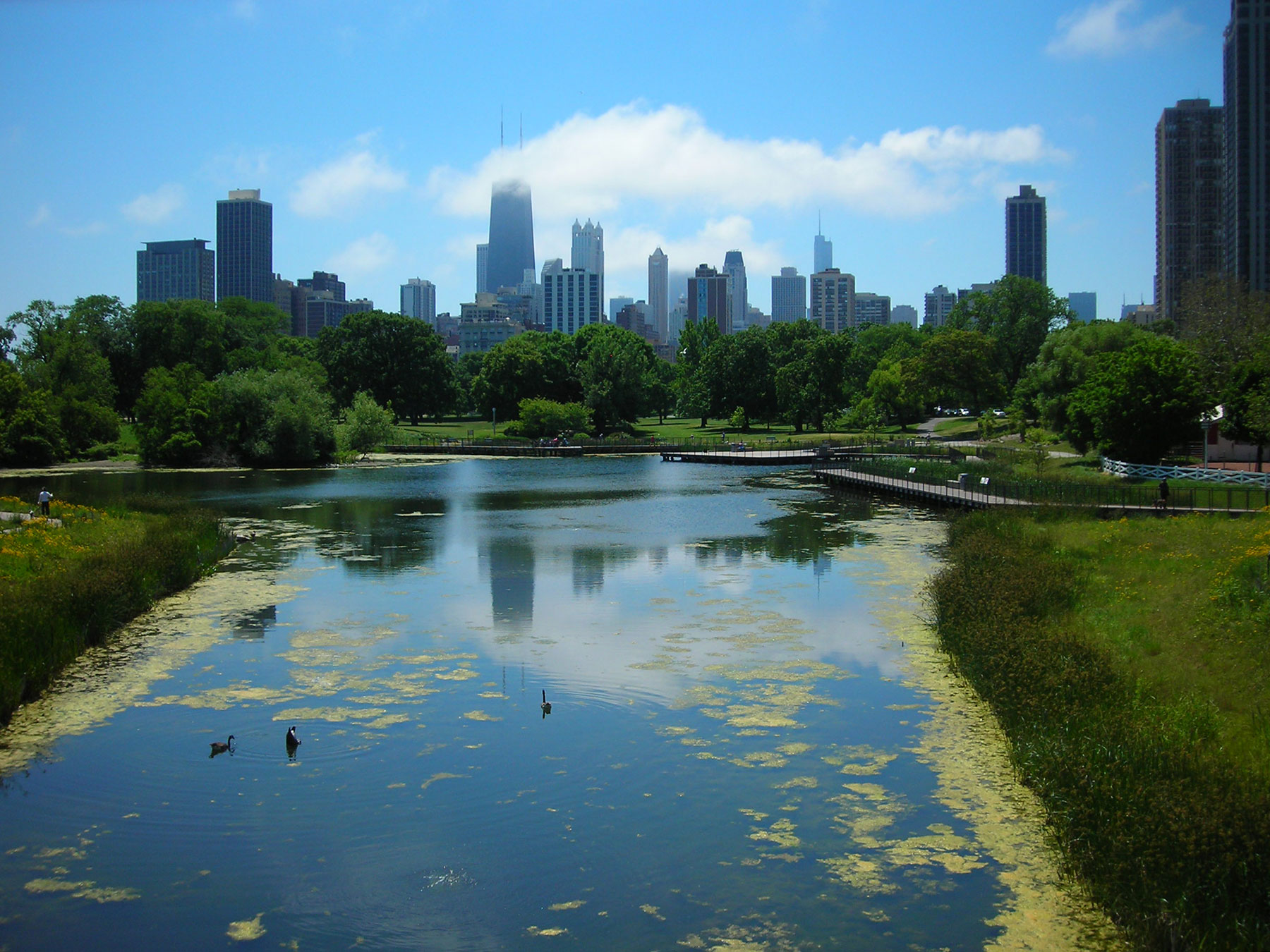 South Pond occupies the oldest part of Lincoln Park. Photo by Julia Bachrach.