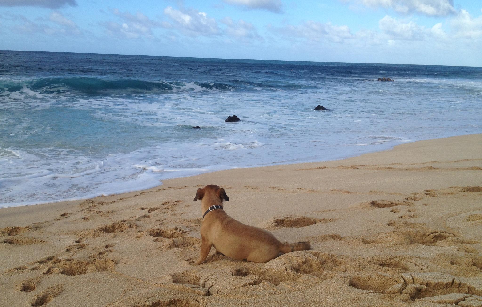 Toni's dog, Buster.