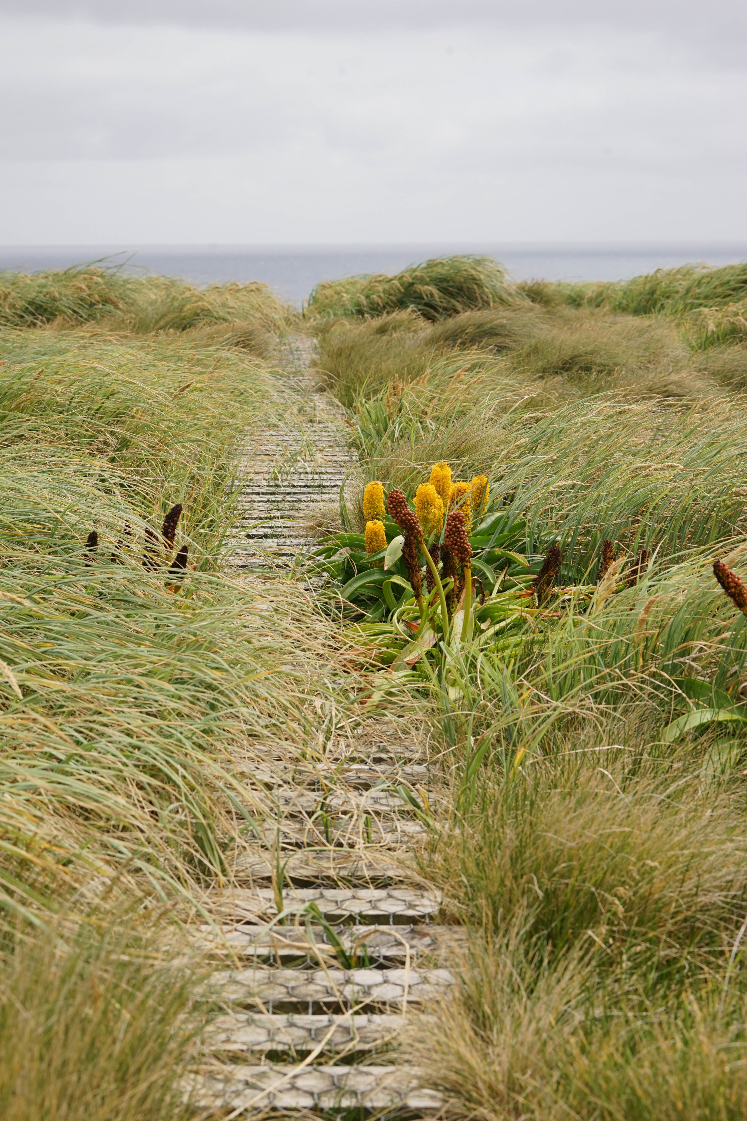 many trails are easy boardwalks
