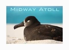 MidwayPoster.jpg