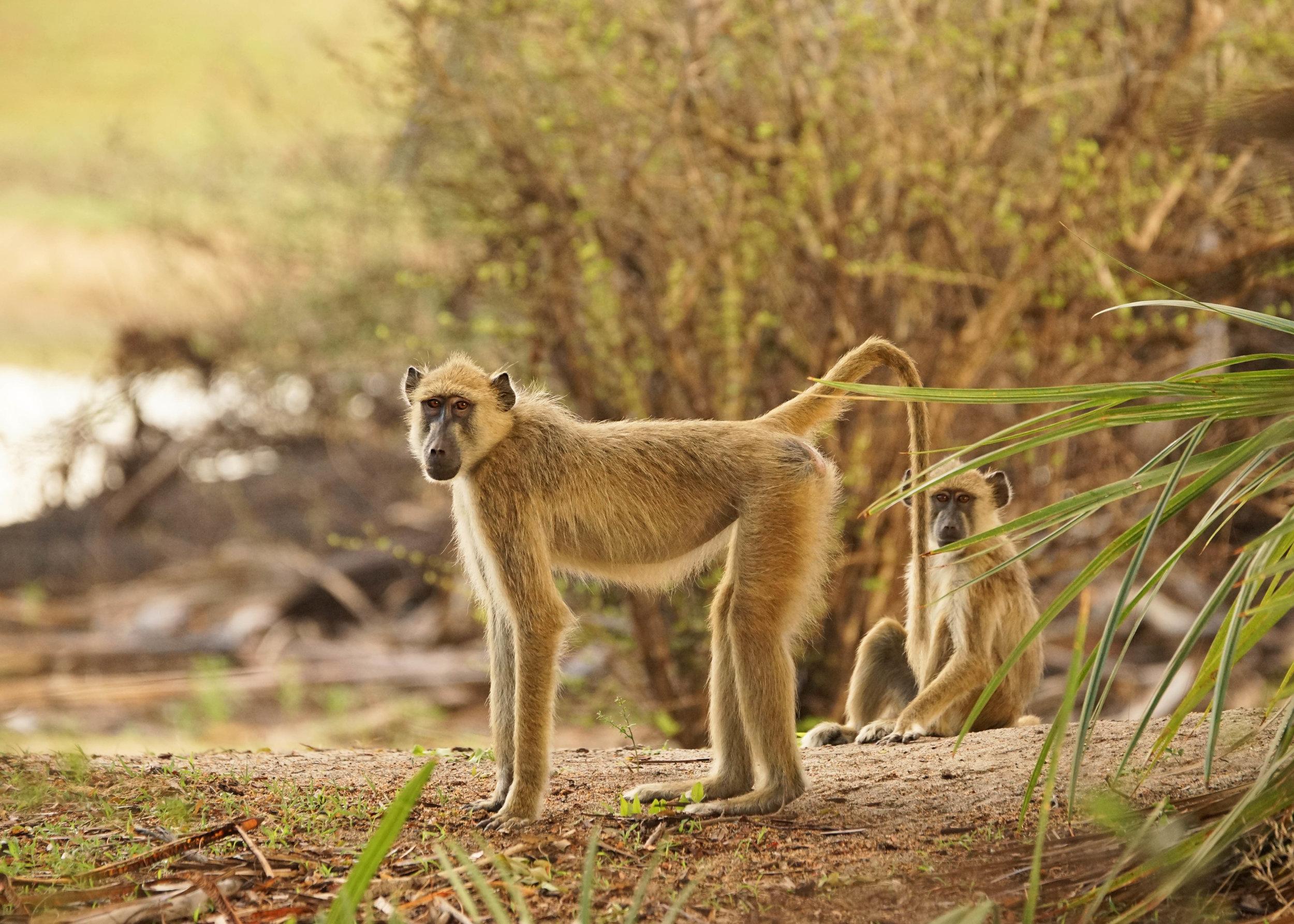 Tanzania18MG-4455-Edit.jpg