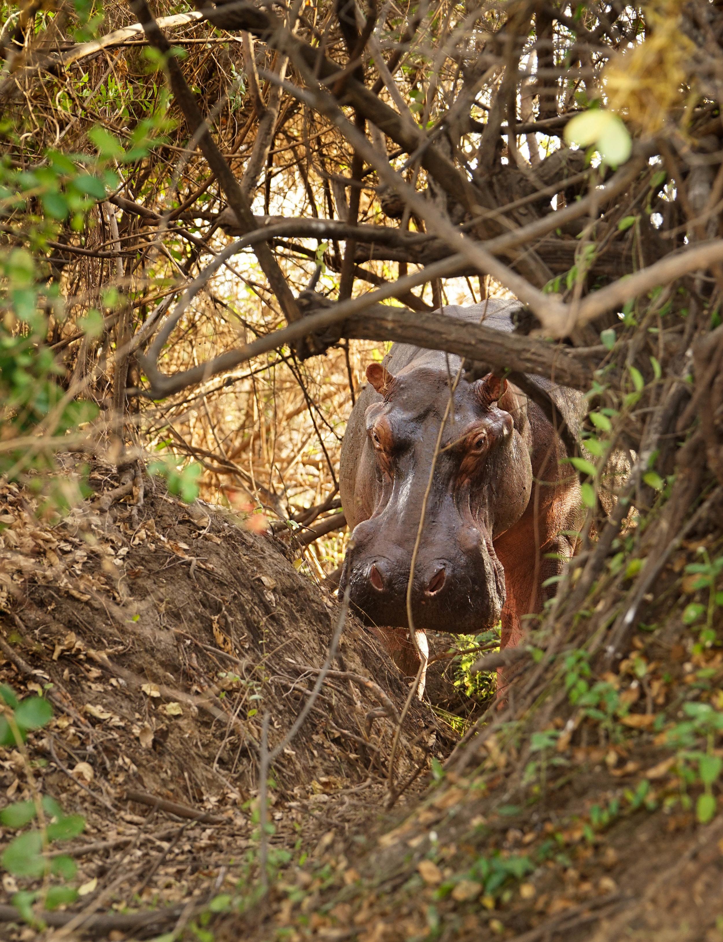 Tanzania18MG-3683-Edit.jpg