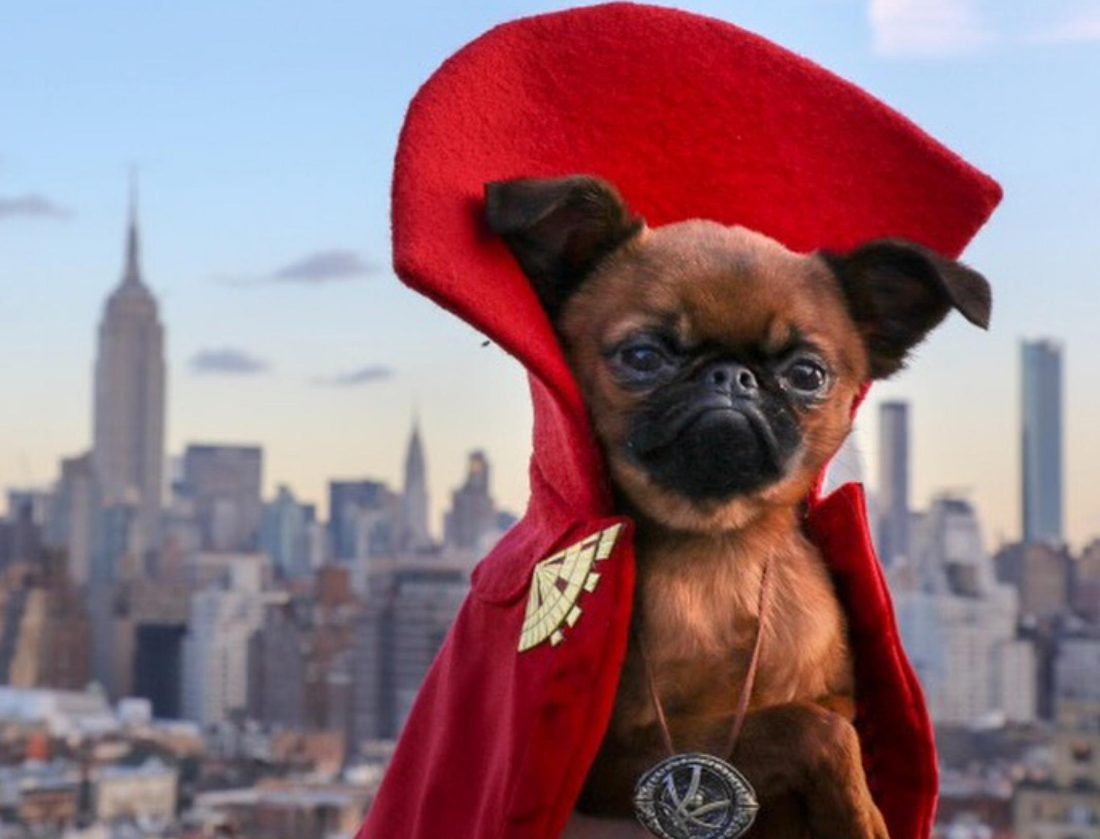 Marvel Studios x Dogtor Strange