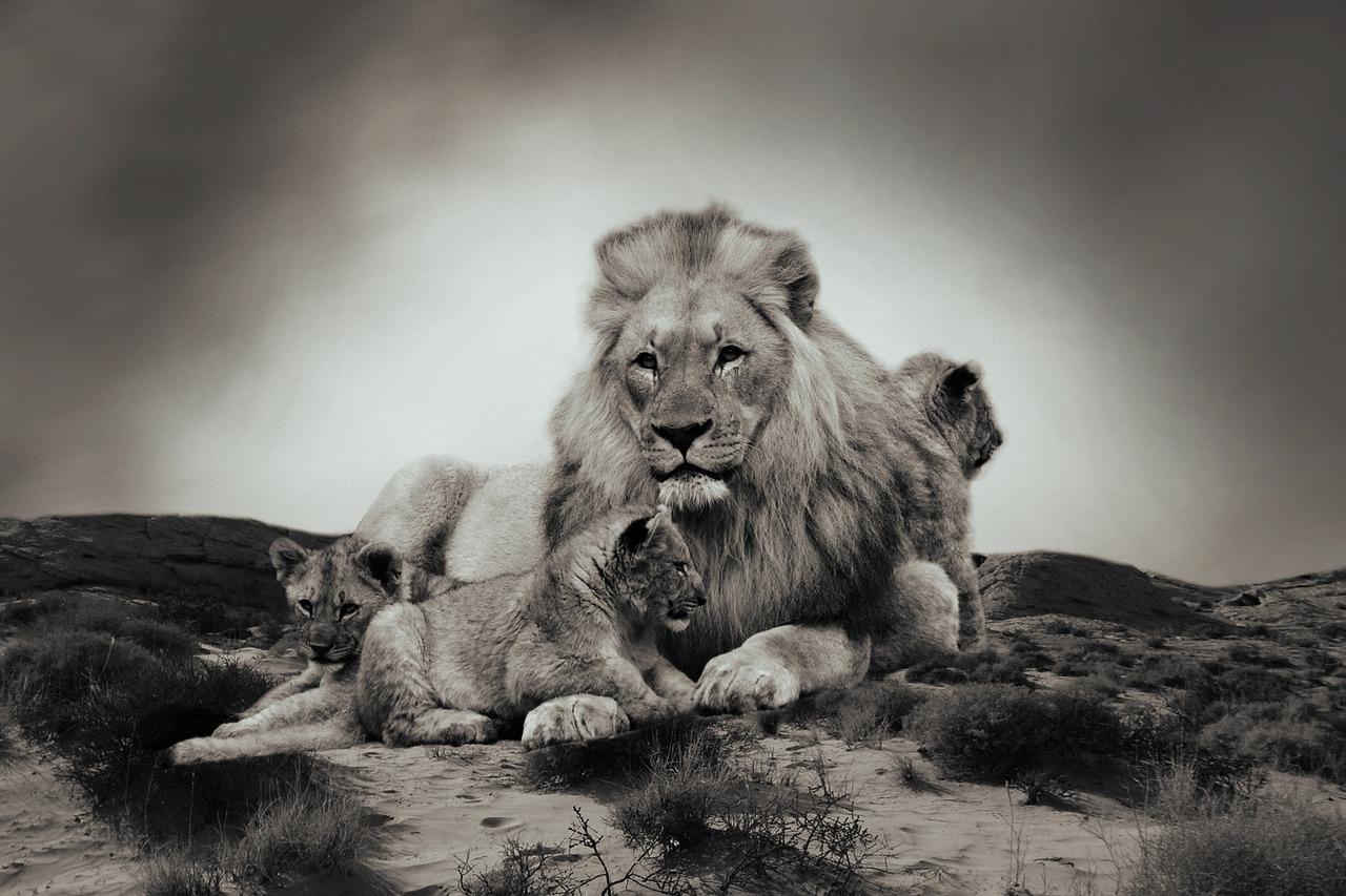 lion-783978_1280.jpg