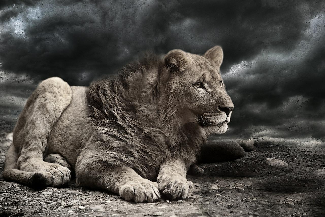 lion-610970_1280.jpg
