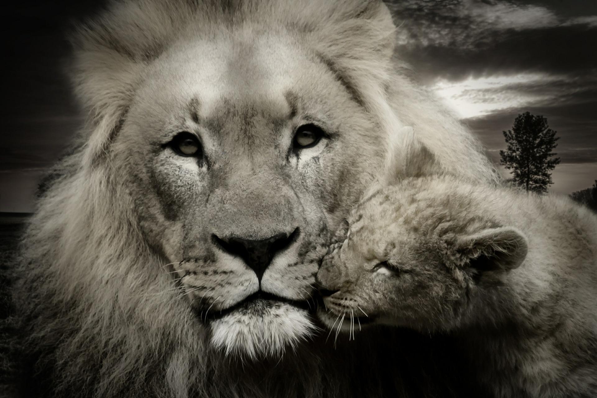 lion-608251_1920.jpg