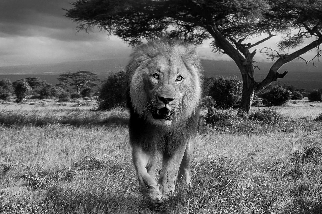 lion-588110_1280.jpg