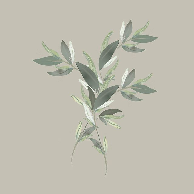 Olive you, Friday. . . #tgif #olivebranch #graphicdesign #illustration #kcmo #kcdesign #kcdaily #flowerart #greens #illustrator