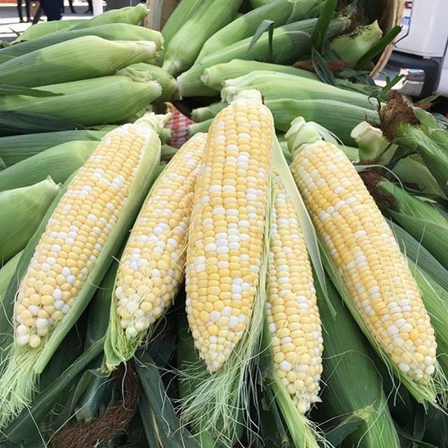 First of the sweet Ontario corn from @fenwickberryfarm. Find it here 3-7 pm. 📷 by @fenwickberryfarm 🌽 🌾 . . . #sweetcorn #ontario #cornonthecob #supportlocal #shoplocal #niagara #annettevillage #farmersmarket #avfm2019