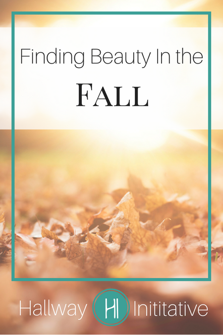 Finding beauty in the fall