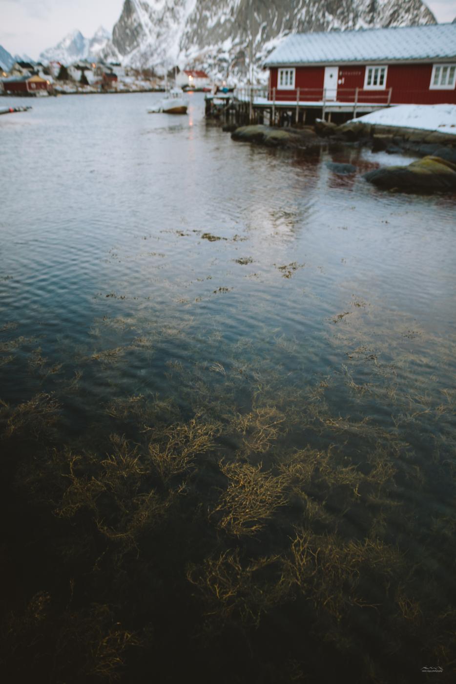 Clean waters of Lofoten