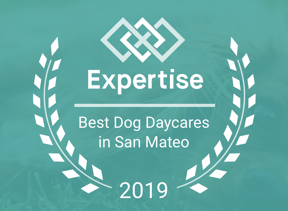 Best Dog DAYcareS in San Mateo (2019)   Expertise - The Team at Expertise dedicates their live to making it SO easy for us all to find the best local experts, every time. Finding the right highly-skilled professional takes significant work, including in-depth research, detailed comparisons, and) deciphering inauthentic reviews.Unlike most other websites and directories, a business can't pay to be included on Expertise. This gives their users the confidence to find and connect with exceptional businesses that are objectively qualified and authentically well-reviewed. Moreover, it certainly made us feel so incredibly proud that our small operation made such an impact.