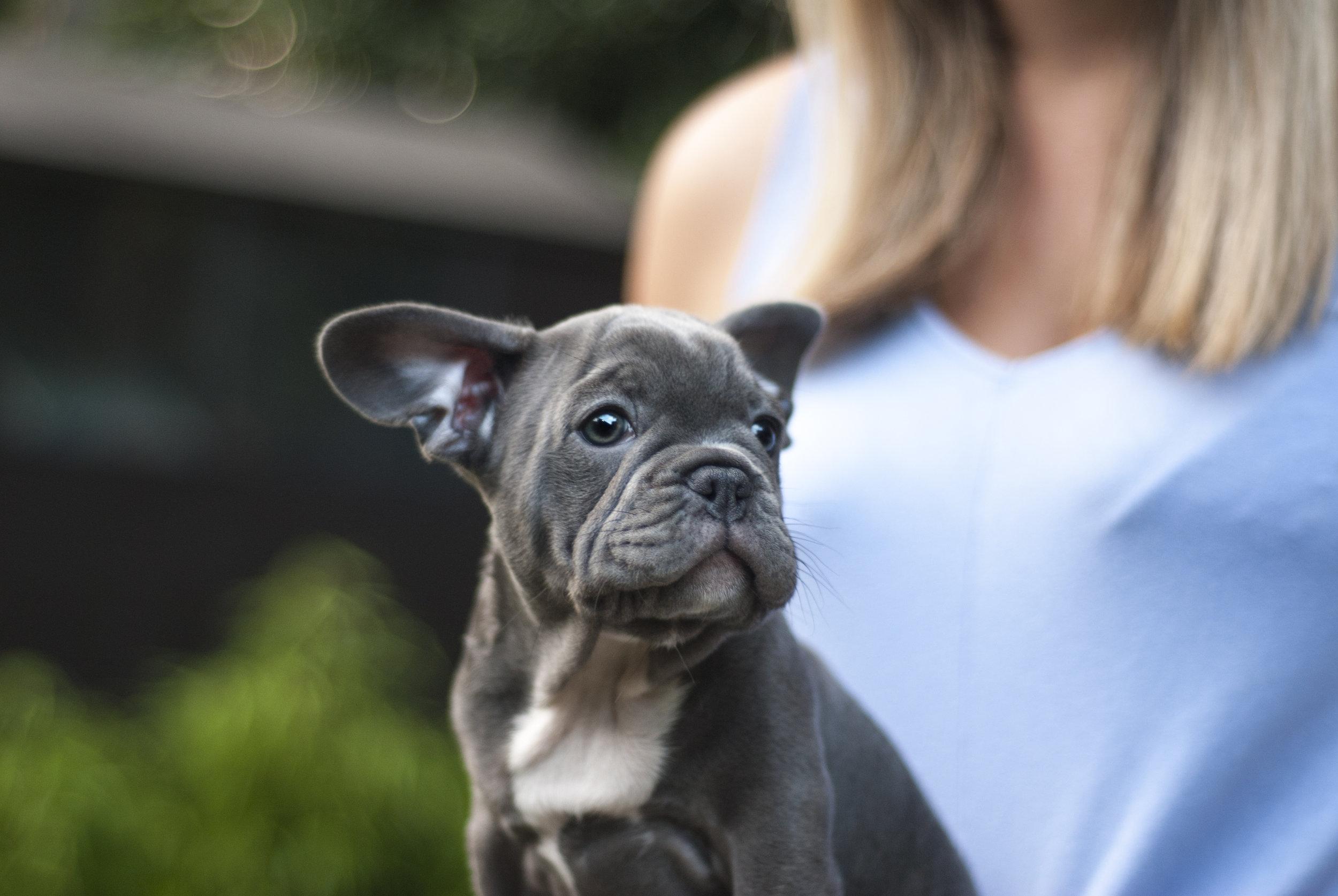 Meet & Greet Dog