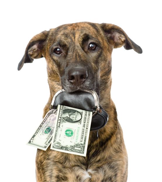 Dog Care Rates