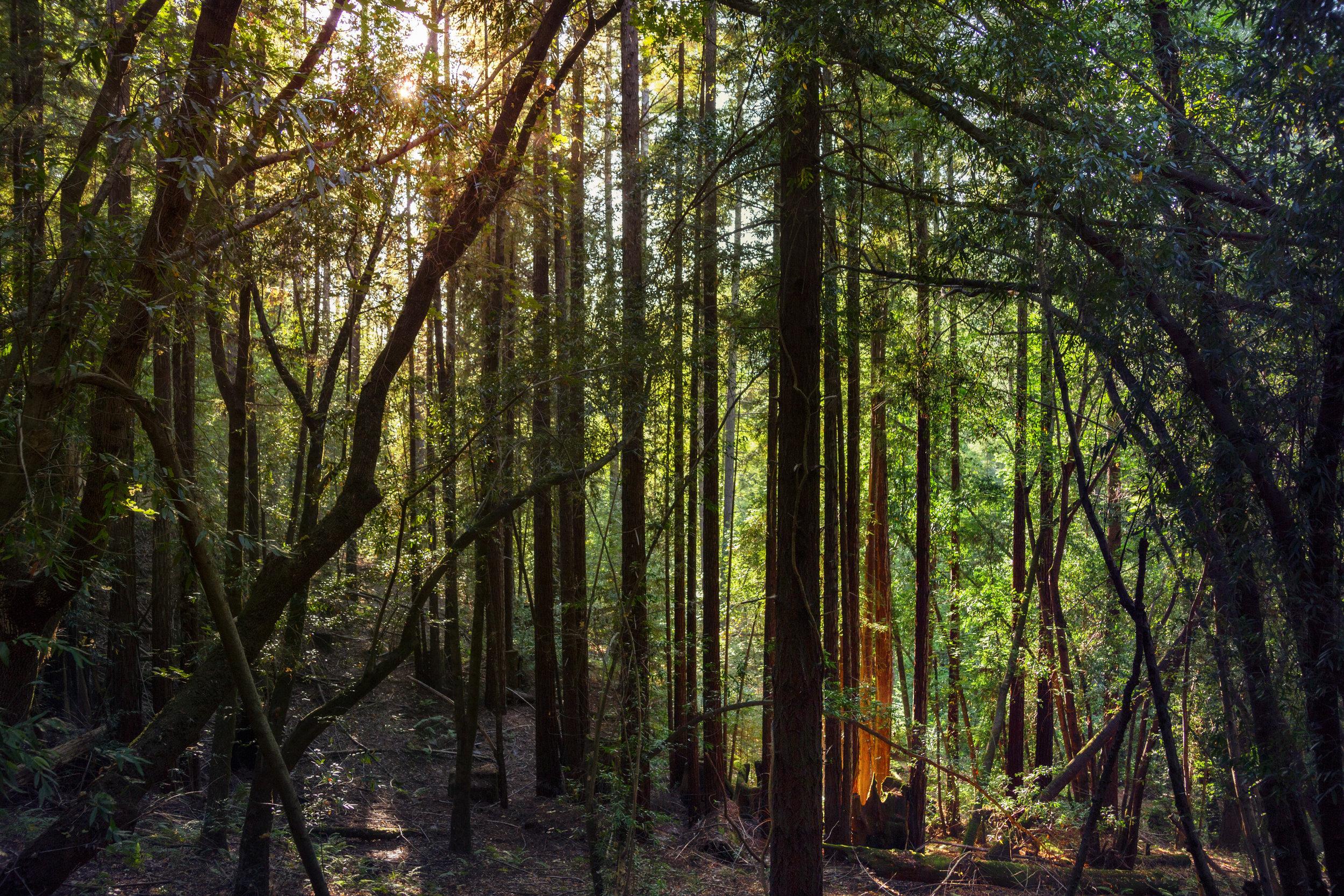 densetrees.jpg