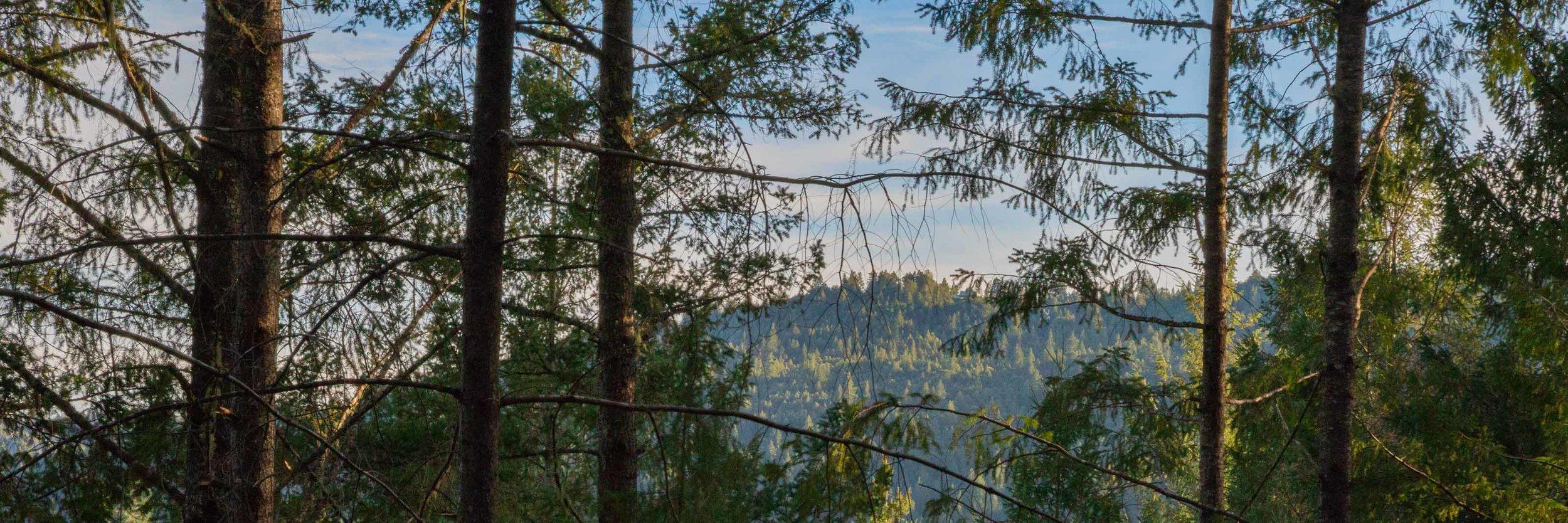 juniper-Vista.jpg