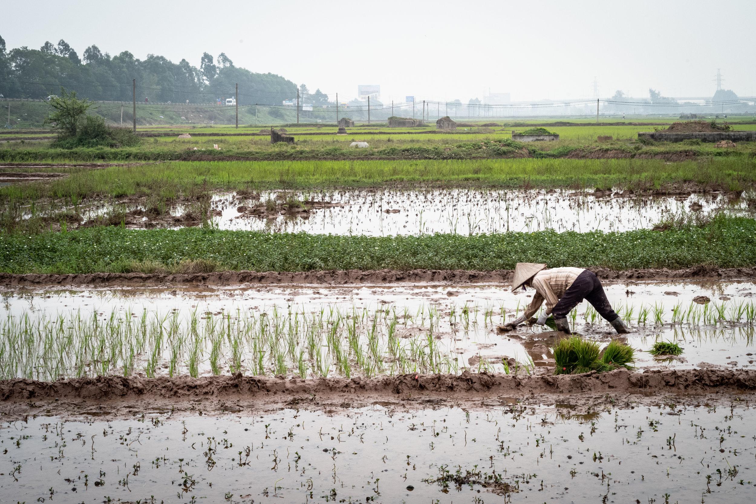 Vietnam-60.jpg