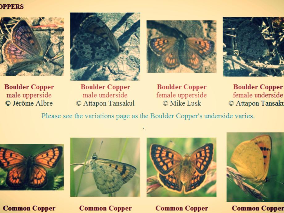 LS_ButterfliesMoths.png