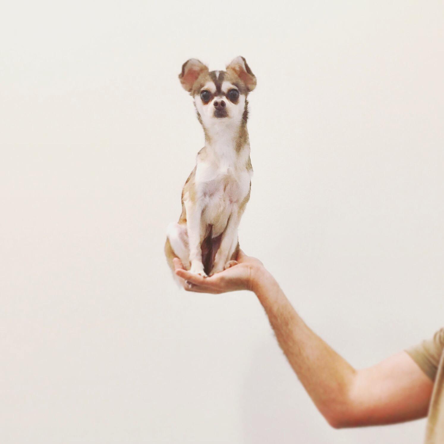Showcasing my dog Koi.