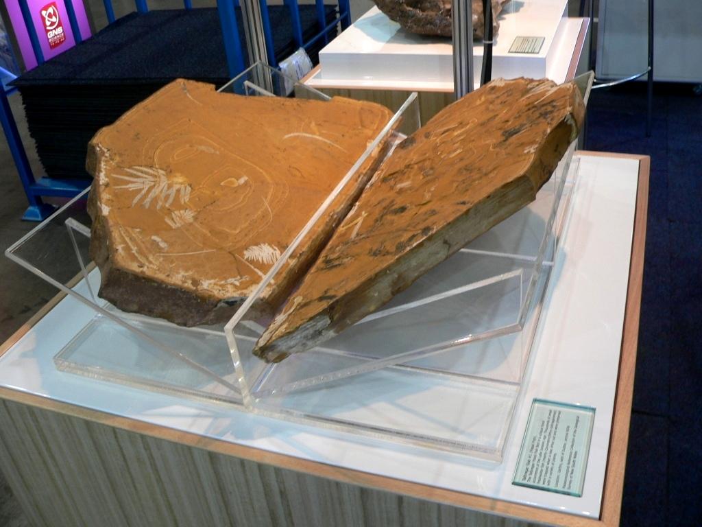 fosill slabs.JPG