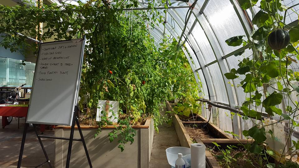 The Groundswell Greenhouse in Invermere B.C.