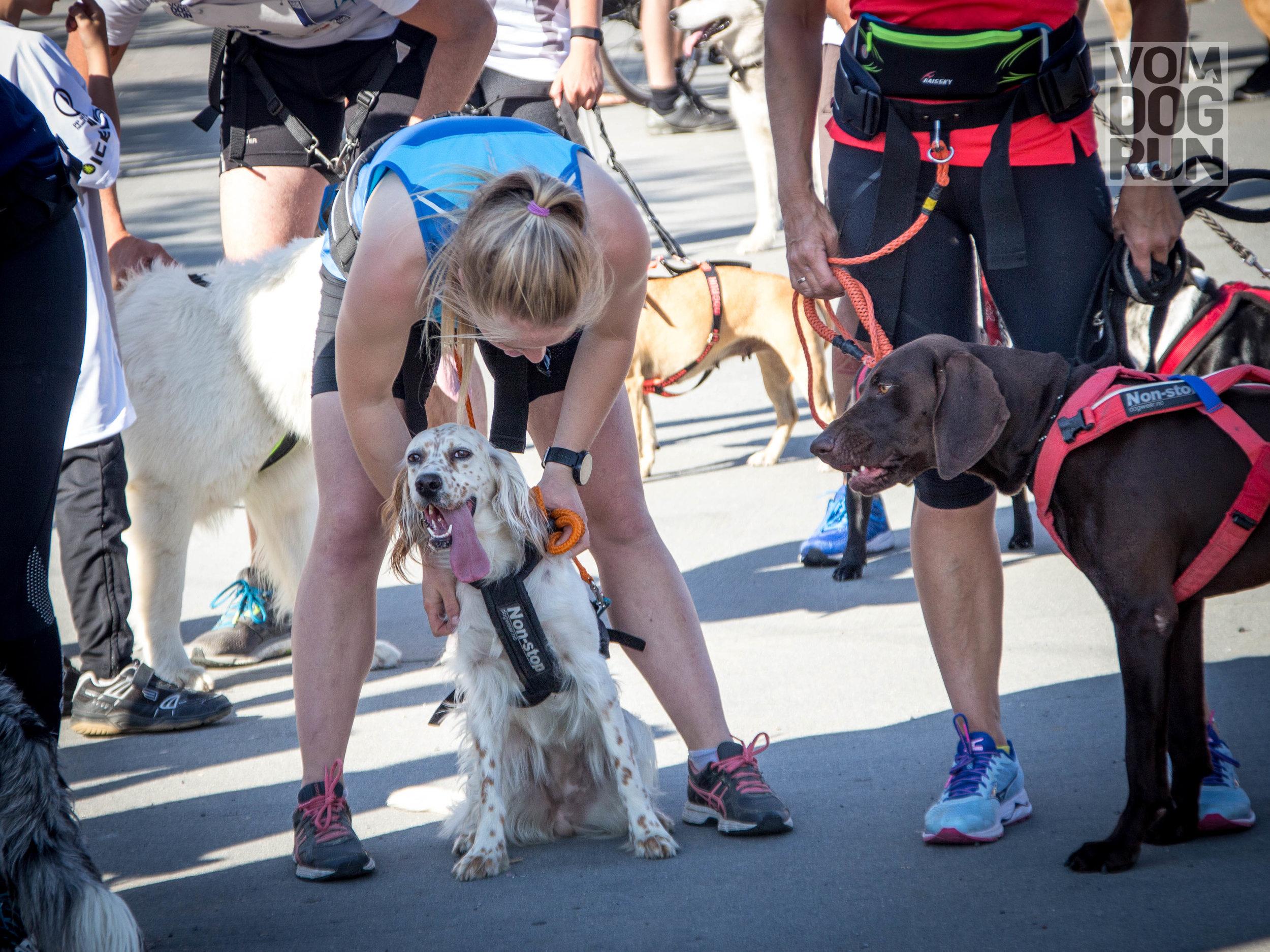 VOM Dog Run SoMe-11.jpg