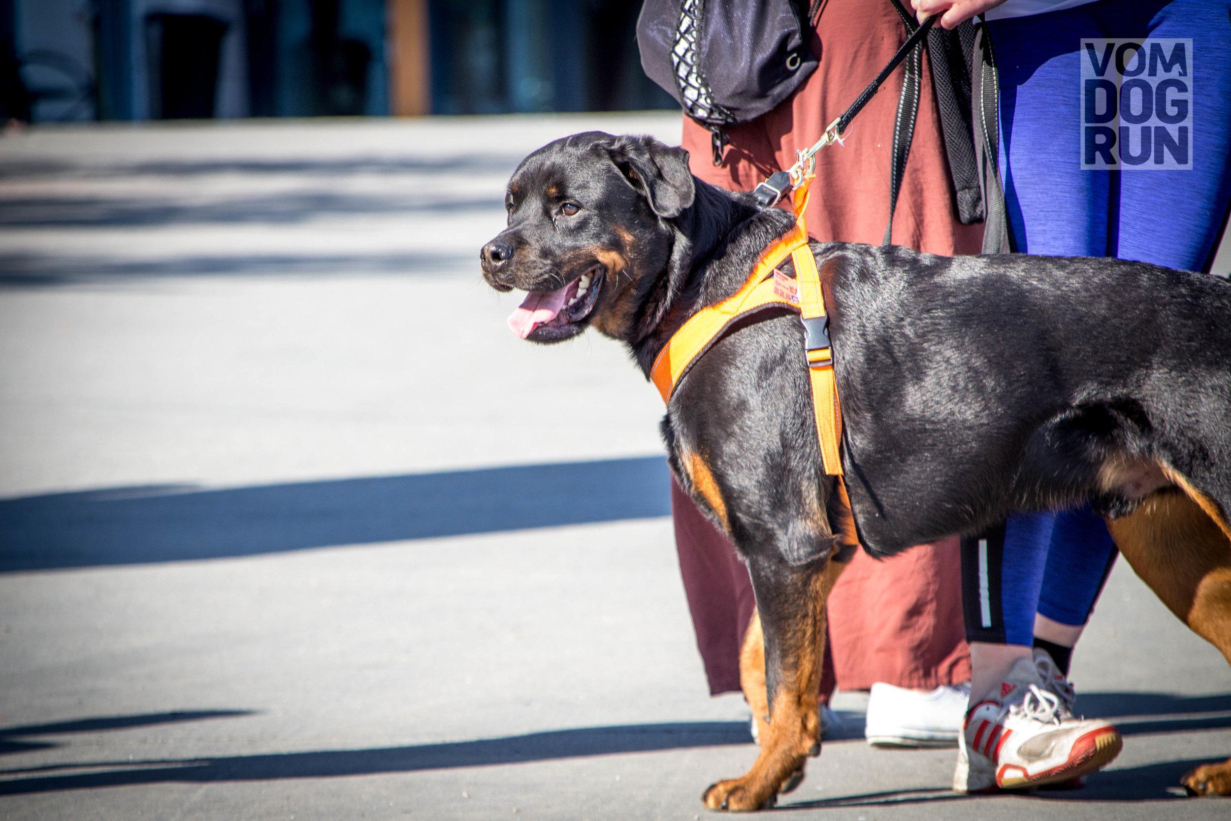 VOM Dog Run SoMe-6.jpg