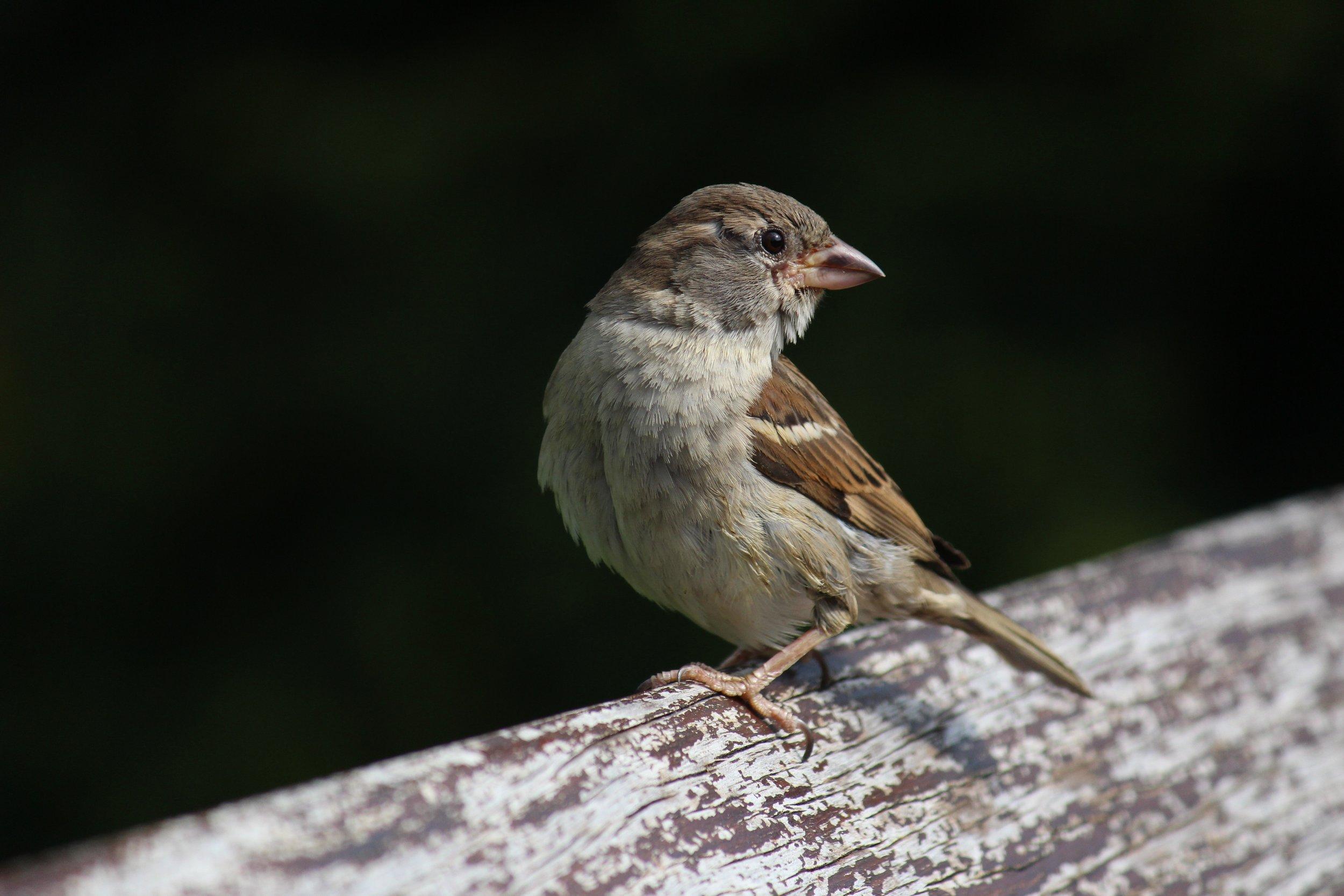 Birds of Wydale.jpg
