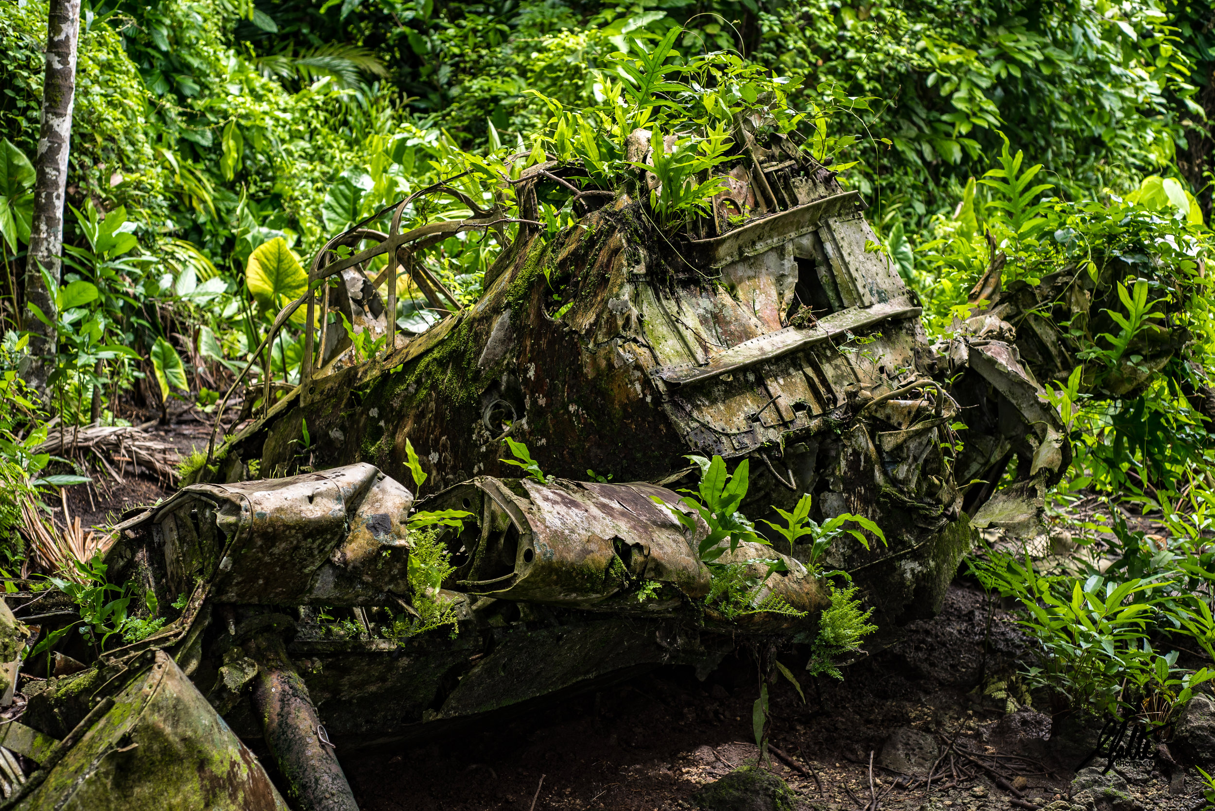 Before the invasion the Japanese used the airfield for bomber and fighter planes to harass American shipping and island bases, all of which were destroyed during the aerial bombardments. This Mitsubishi Zero crash landed in what is now jungle, killing the pilot. You can still see the extended wheels. The propeller and engine can be found further in the jungle.